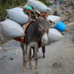 Что привезти из Черногории