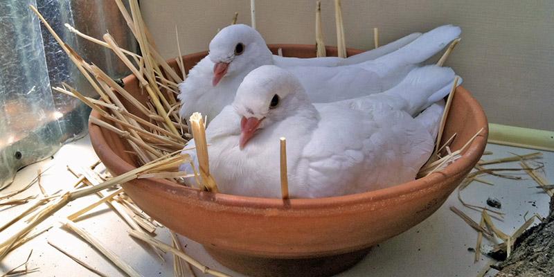 Выставки голубей в 2018