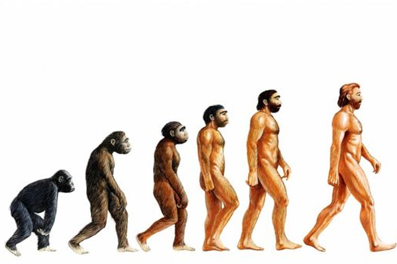 Теория эволюции человека